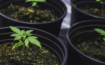 """Problems Growing Your Own Personal Cannabis Plants?Send Them to """"Boarding School"""""""